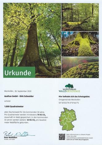 Wohllebens Waldakademie
